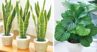12 piante che sopravvivono anche nell'angolo più buio della tua casa