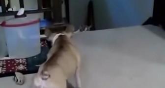 Le chien qui croyait avoir le dessus sur le chat