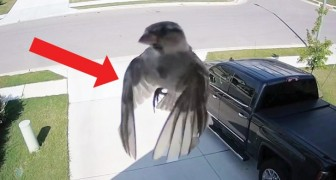 In these captured images a bird appears to be floating!
