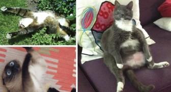 19 katten die kattenkruid vonden... en direct daarna lijp gingen doen!