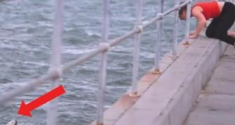 Disperdeva le ceneri della nonna nel mare ma ad un tratto vede qualcosa in acqua e si tuffa