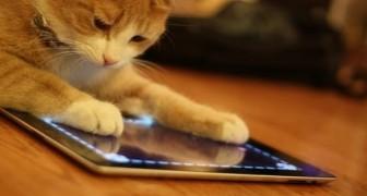 Animais que jogam com iPad!