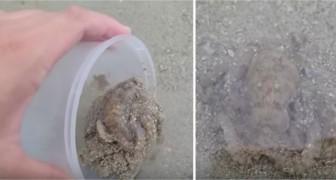 Il sauve une pieuvre sur la plage, mais ce qu'elle fait juste après est la dernière chose à laquelle il se serait attendu