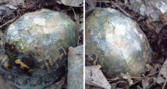 An innovative 3D shell saves a tortoise!