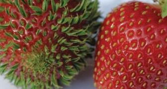 15 schockierende Bilder von frühreifem Gemüse und Obst