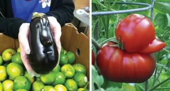 18 verduras muito estranhas que parecem outra coisa...