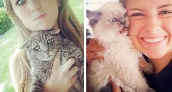 25 volte in cui i gatti non hanno voluto partecipare ai selfie ed hanno reso lo scatto esilarante