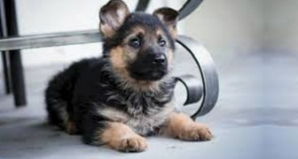 Un estudio confirma que los perros saben reconocer una persona mala. De este modo...