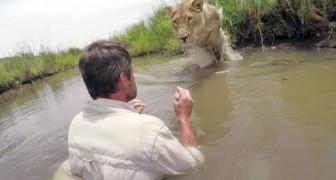 7 anni dopo aver salvato una leonessa la ritrova tra le acque di un fiume: l'incontro vi mozzerà il fiato