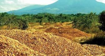 Uma fábrica de suco vende toneladas de cascas de laranja em um terreno: 16 anos depois é irreconhecível