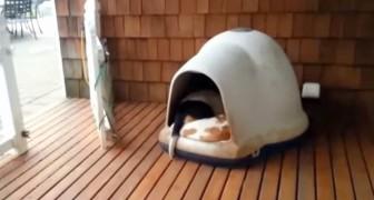 Si avvicina alla cuccia dei suoi cani... Quando escono fuori rimane sorpresa anche lei!