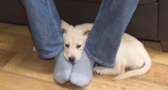 Pourquoi le chien se couche-t-il sur vos pieds? Voici 8 choses que vous ne saviez pas sur le comportement des chiens
