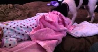 Ein fürsorglicher Hund deckt ein schlafendes Mädchen zu