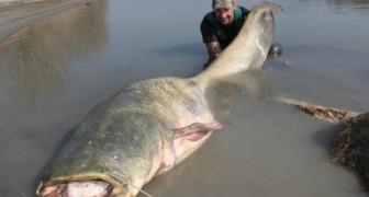 Mann angelt einen 1000 kg schweren Fisch