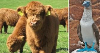 10 animaux très rares dont vous douterez de l'existence, et pourtant...