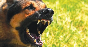 Los perros saben reconocer si una persona es buena o mala: lo dice una investigacion cientifica