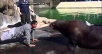 E' ora delle flessioni con Walrus