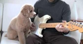 O cachorro que toca guitarra