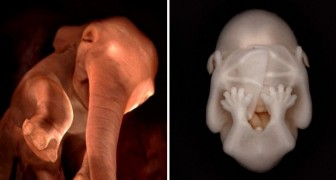 15 photos display the breathtaking beauty of unborn animals in their mother's womb