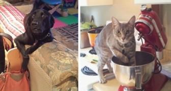 17 dieren op heterdaad betrapt die hun onschuld niet konden bewijzen