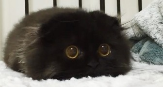 Here for you is Gimo, a cat with the biggest eyes you have ever seen!
