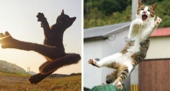 Questo fotografo è specializzato nell'immortalare gatti ninja: i suoi scatti sono spettacolari