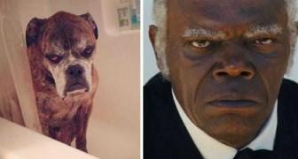 11 berühmte Persönlichkeiten, die einen tierischen Doppelgänger haben