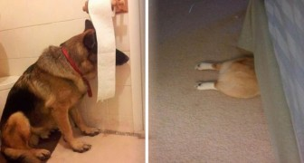 21 dogs that are convinced that If I do not see them, they do not see me!