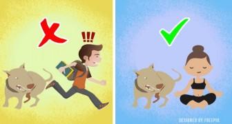 5 choses à faire (ou ne pas faire) pour éviter d'être attaqué par un chien