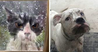 22 Tiere, die aus dem Haus ausgesperrt wurden, aber dort nicht bleiben wollen