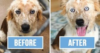 Une fille adopte un chien pour ses 25 ans: les photos avant-après n'ont pas besoin de commentaires