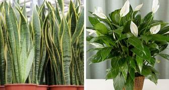 7 plantes qui amélioreront la qualité de l'air de votre intérieur