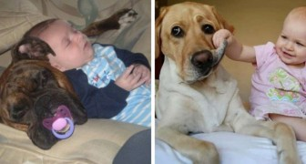 11 photos that demonstrate how difficult it is for a dog or cat to live with a small child!