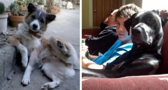 Hunde, die sich wie Menschen benehmen: Diese Aufnahmen machen gute Laune