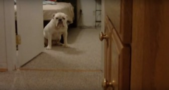 Hunde, die einfach nicht gebadet werden wollen