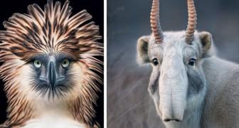 Un photographe passe 2 ans à photographier des animaux en danger: ses clichés vont vous briser le cœur