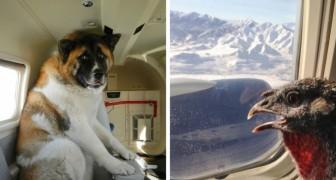 20 foto di animali di ogni tipo in volo insieme ai loro proprietari