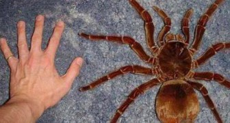 13 Kreaturen die wirklich existieren und deine Vorstellung von groß umkehren werden