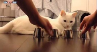 Eine hochbegabte Katze