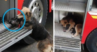 13 situaties waar honden mensen hebben verrast met hun ongelofelijke heldendaden