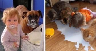 19 exemples où les enfants et les animaux donnent vie à des situations hilarantes.