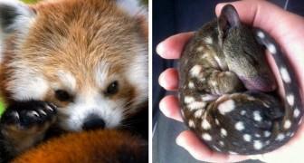 18 cuccioli di animali che probabilmente non avevate mai visto prima