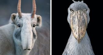 Un fotografo pasa 2 años a fotografiar animales en extincion y realiza tomas de una belleza conmovedora