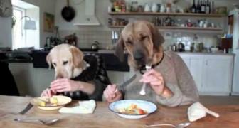 La cena di due educatissimi cani