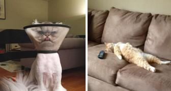 Plus de 20 photos qui parleront aux propriétaires de chats