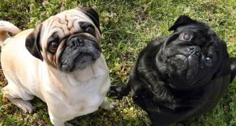 Als je echt van deze honden houdt dan zou je ze niet moeten kopen
