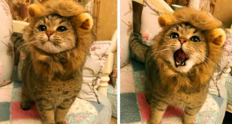 25 animais que fizeram uma expressão fantástica no momento certo!