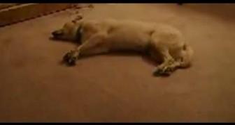 Il cane che sogna
