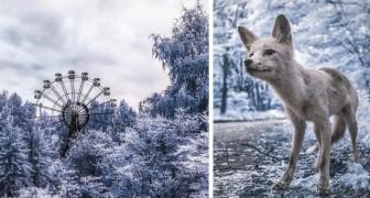 Tchernobyl: les spectaculaires photos infrarouges 31 ans après la catastrophe