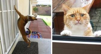 23 animais que ficaram fora de casa e querem muito entrar!